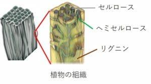 植物の組織の図解