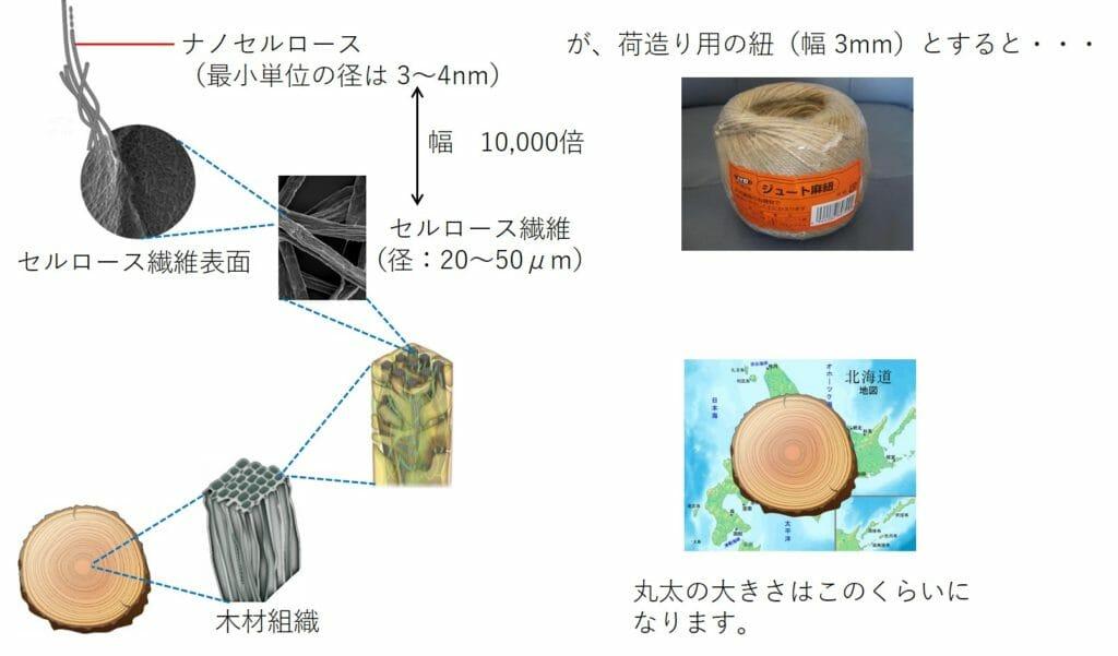 ナノセルロースのサイズの図解