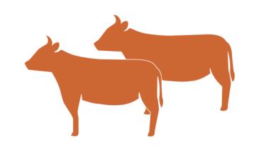 オハイオを拠点とする新興企業が培養肉生産のためのバクテリアナノセルロース足場を開発